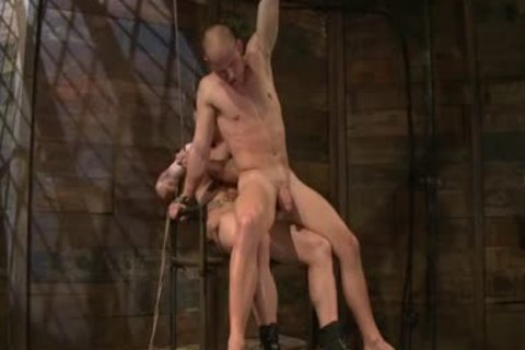 Phenix Saint & Patrick Rouge. Domination
